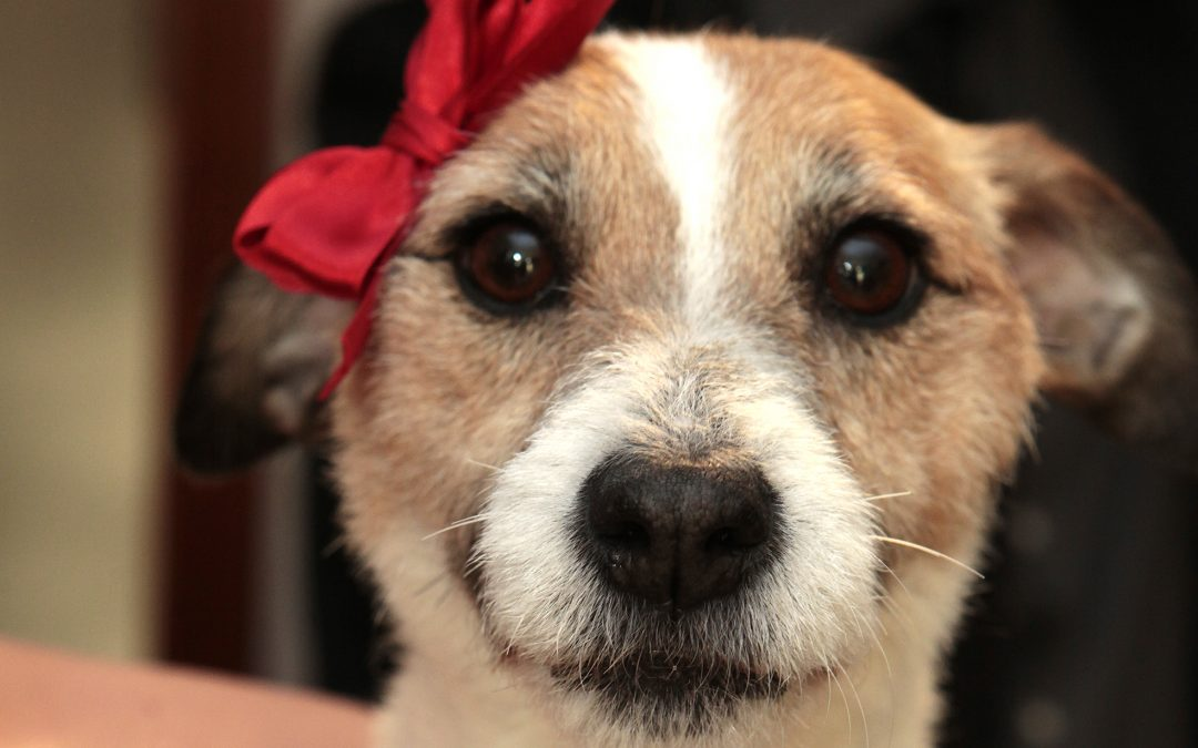 ¿Tenéis mascota?¿Queréis que forme parte importante en vuestra boda?